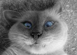 Кот лук