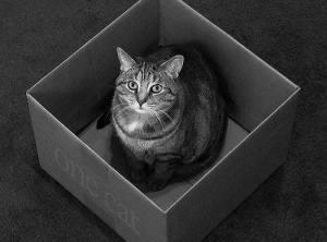 Шредингер кот3