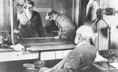 Pavlov and dog