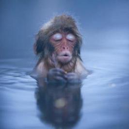 taste monkey